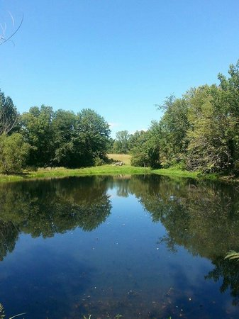 Cedar Crest Lodge: Overlooking one of the many ponds on property