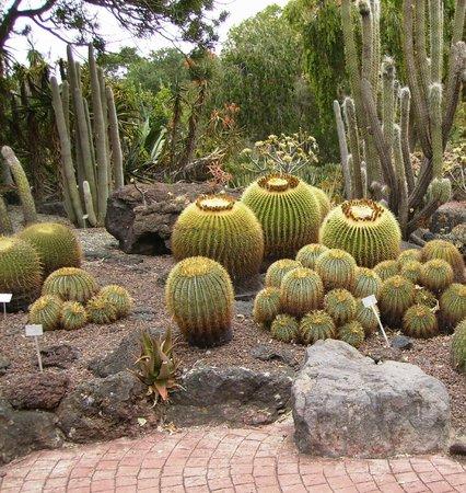Jard n picture of jardin canario las palmas de gran for Jardin 87