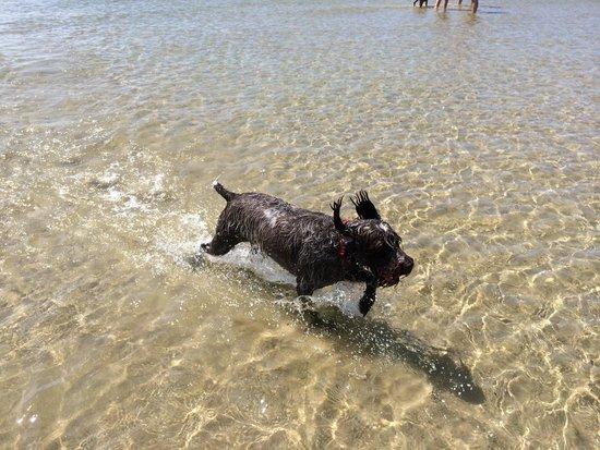 Merland Park Cottages: Happy Dog at Sandbanks