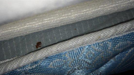 Days Inn Grove City Columbus South : bed bugs