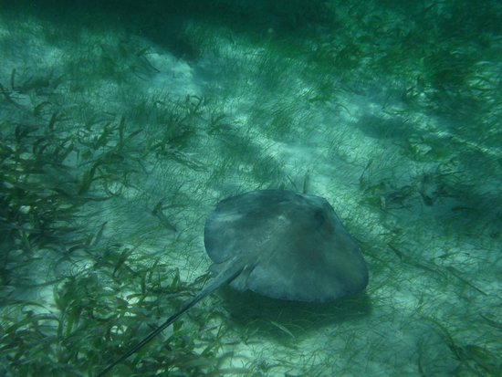 Caveman Snorkeling Tours: Stingray