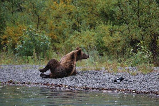 Steller Air Service LLC Tours: Bear