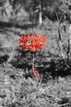 Pousada Colibri: Garten