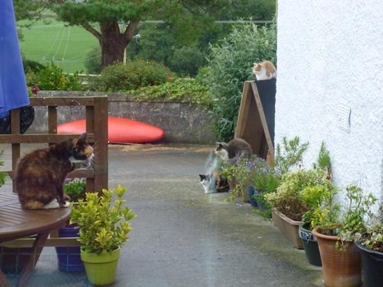 Bronhaul Farm Cottages: The farm cats