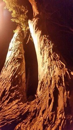 Golden Odyssey Kolimbia: Trees.on eucalyptus  street (main shopping and bars ) all famiy friendly