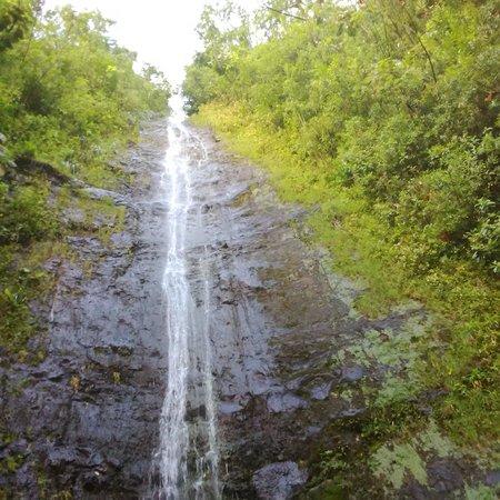 Manoa Falls: The fall itself