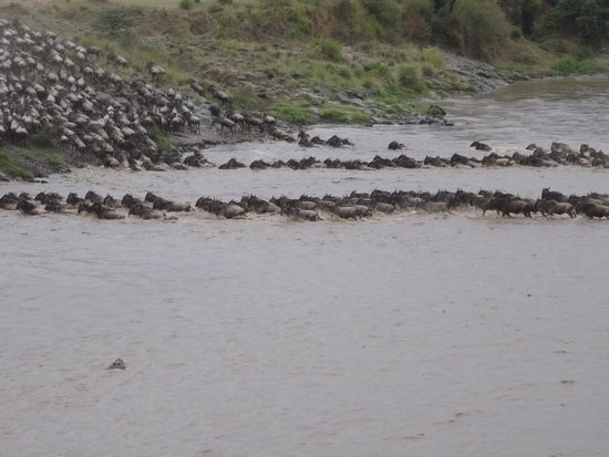 Enkewa Camp: Great Migration - Hungry Croc