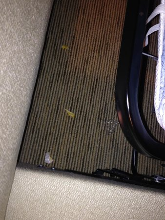The Ritz-Carlton, Amelia Island: Garbage under the sofa.