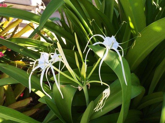 1800 أتلانتيك سويتس: Tropical flowers everywhere!