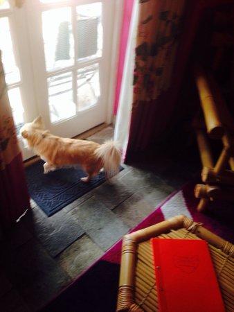 Crab & Boar: So dog friendly!
