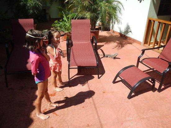 Hotel Bula Bula : My girls LOVED the parrots and really enjoyed feeding the iguana.