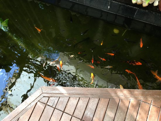 Royal Orchid Beach Resort & Spa, Goa: Fishes at the entrance