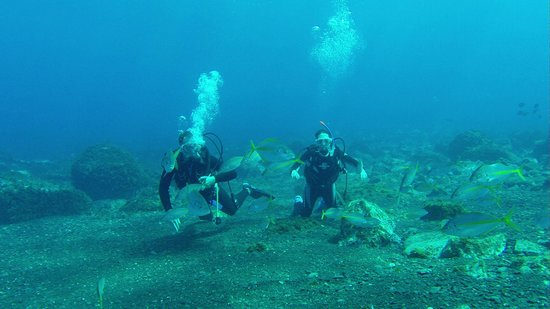 Snapper : Diving nearby--photo by owner