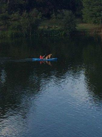 Lady Bird Lake Hike-and-Bike Trail: Dog Paddle