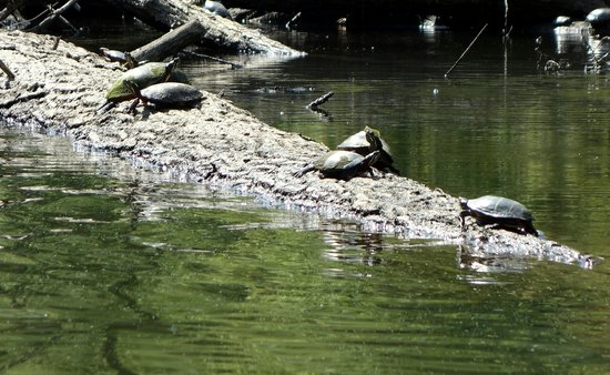 Concord River: 2