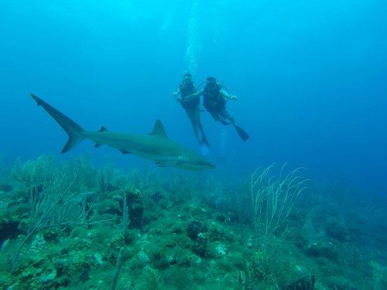 Felipe Diving Center: Buceo