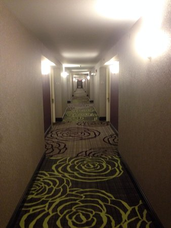 Hilton Garden Inn Springfield : Hall 2nd Floor...