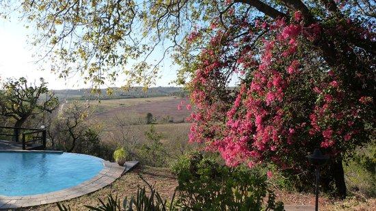 Abangane Guest Lodge: pool view