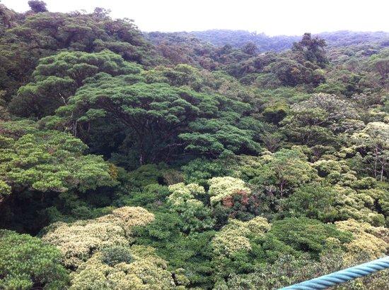 Parque Selvatura: Vista desde los puentes