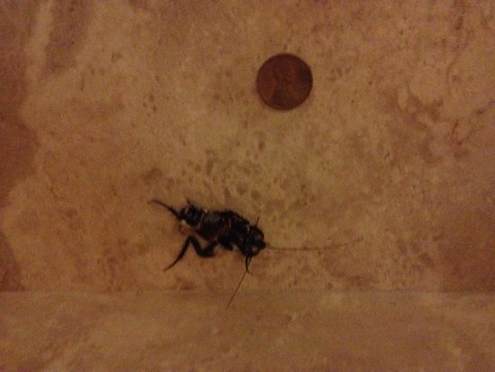 Statesville, Carolina do Norte: monster 4th floor roach