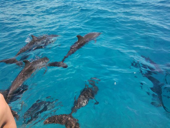 WildQuest : glorious magical dolphins