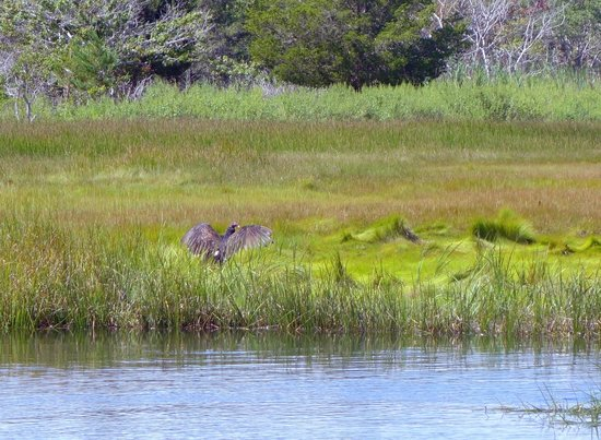 Scorton Creek : Osprey