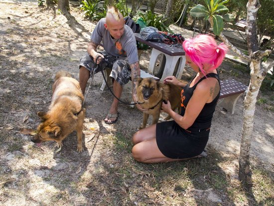 Volunteers walking dogs at Soi Dogs shelter - Picture of ...