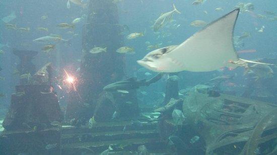 The Lost Chambers Aquarium : lagoon