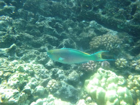 Maui Magic: Fish at Molokini Crater