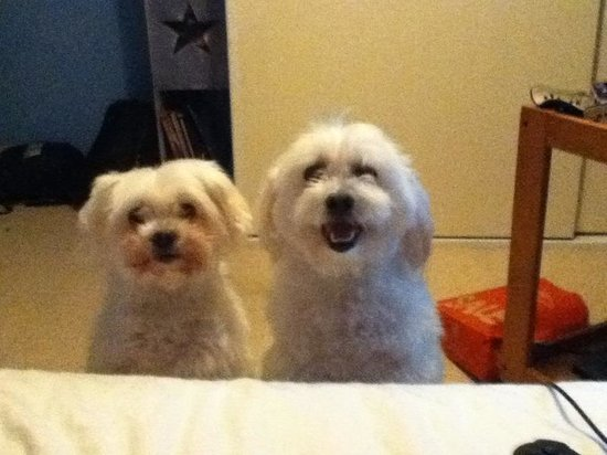 Toby and Chloe enjoyed their stay...