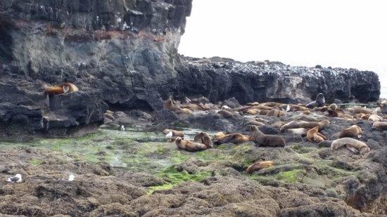 Wildlife Coast Cruises: Sunning seals