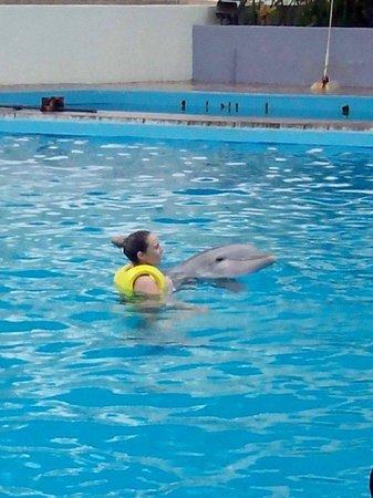 Interactive Aquarium: nado individual