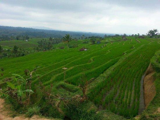Putu Bali Driver Private Day Tour