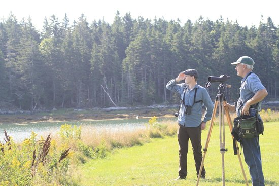 Down East Birdwatching and Nature Tours: Looking for birds with the scope