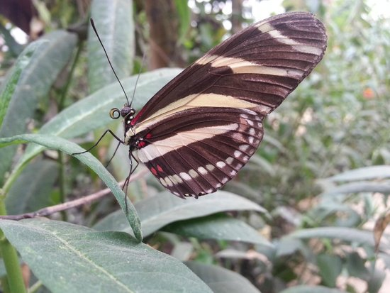 The North Somerset Butterfly House: Congresbury does tropical