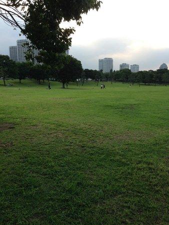 Pacifico Yokohama Seaside Park : 芝生