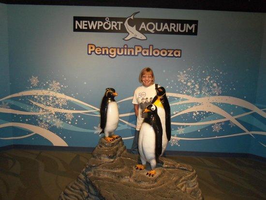 Newport Aquarium: lots and lots of 'live' penguins