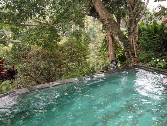 Villa Awang Awang : PISCINE DE LA VILLA BEJI