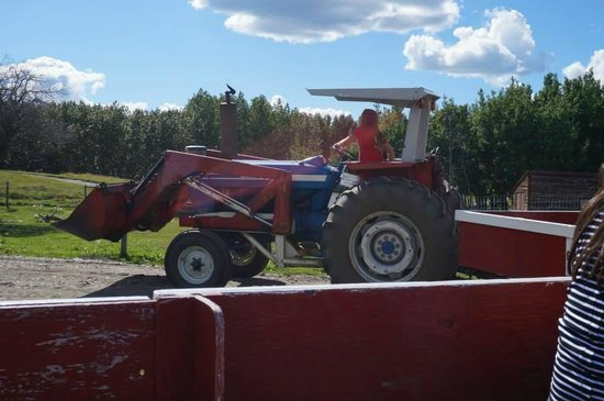 Butterfield Acres Farm: Tracter ride
