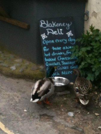 Even the Blakeney ducks have good taste!