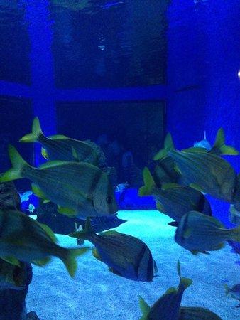 Pesci tropicali foto di acquario di cattolica cattolica for Pesci tropicali acquario