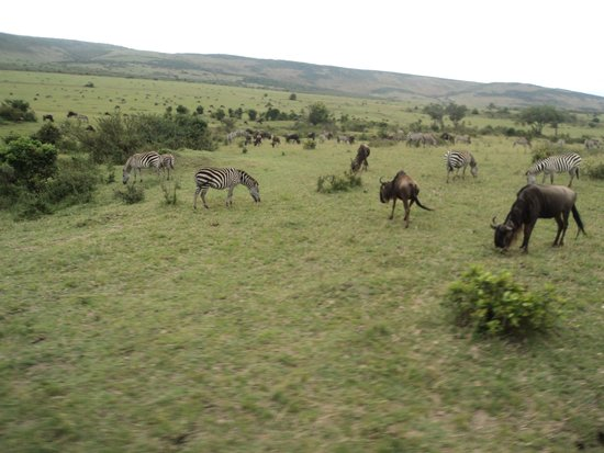 Ol-moran Tented Camp: Wildlife in nearby area