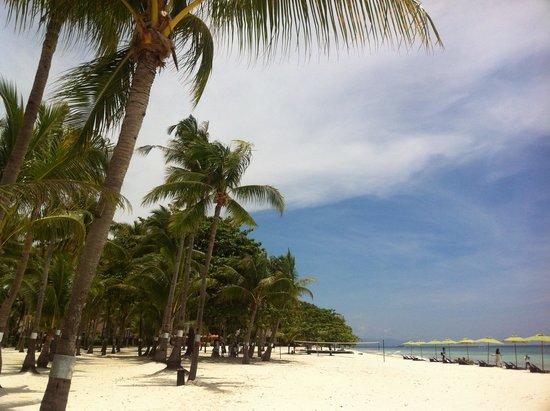Bohol Coconut Palms Resort : 美麗的沙灘
