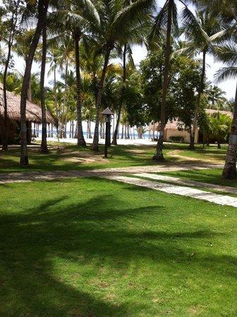 Bohol Coconut Palms Resort : 房間望出去的景色