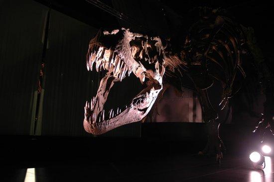 Territorio Dinópolis: Reproducción de dinosaurio
