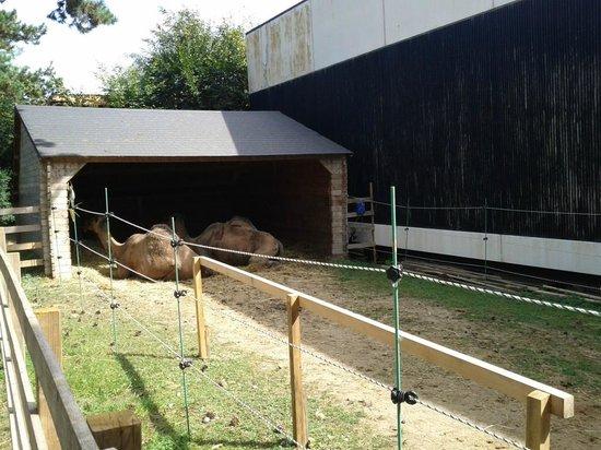 Jardin d'Acclimatation: en attendant le client, mais les filles du bois ont de meilleures conditions