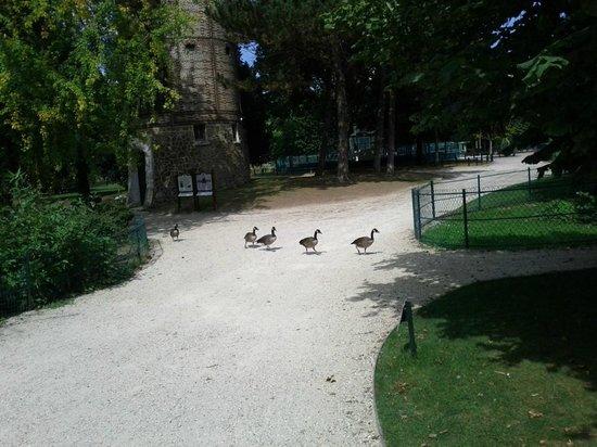 Les nes du berry photo de jardin d 39 acclimatation paris for Jardin acclimatation