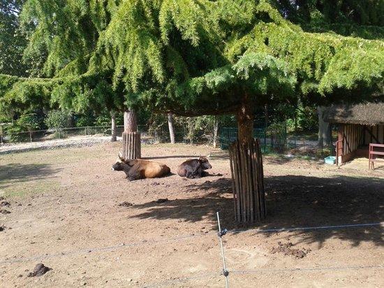 Entr e photo de jardin d 39 acclimatation paris tripadvisor - Prix entree jardin d acclimatation ...