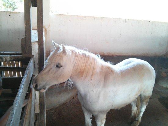 Fazenda do Chocolate: Cavalo.