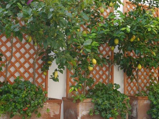 Holidays Fico d'India: Pino's Lemons